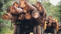 En 2003 ONGs aprobaron una cuestionada ecocertificación para Forestal Arauco y para la CMPC, proceso que no consultó a los Mapuche.